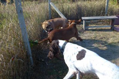 Дресировка и обучение на куче