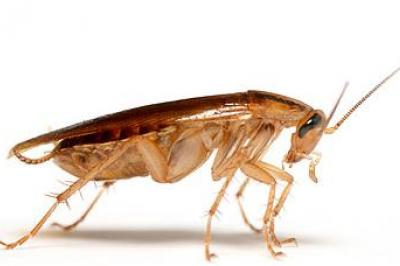 Изгонете хлебарките