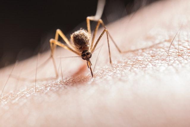 комар кацнал на човешка ръка